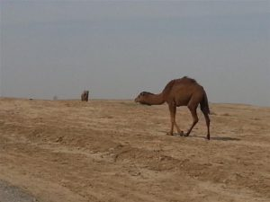 Turkmen desert