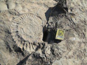 Fossiel van een dinosaurus in Turkmenistan